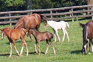 Horse Farm for Sale